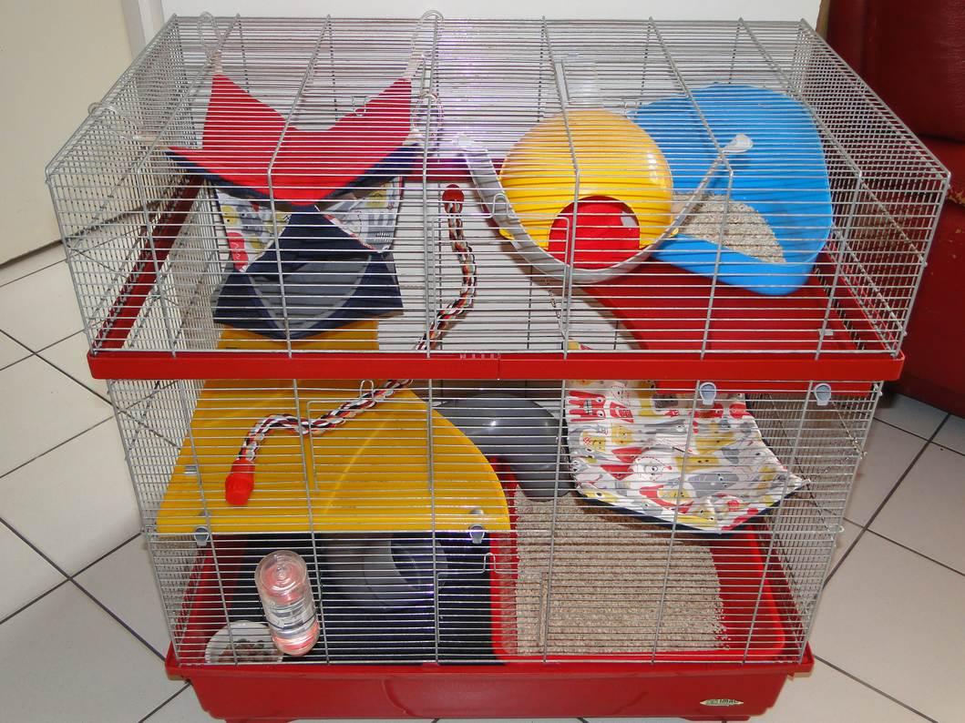 Photos de vos cages - Page 2 Dsc04725