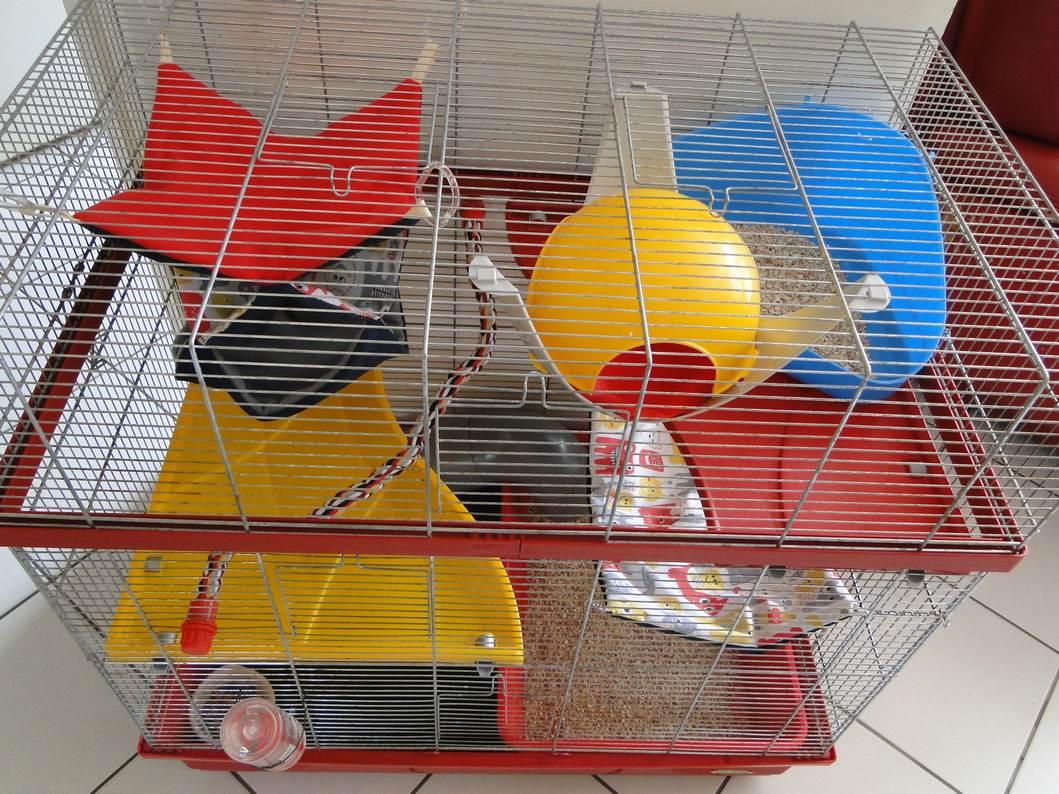 Photos de vos cages - Page 2 Dsc04727