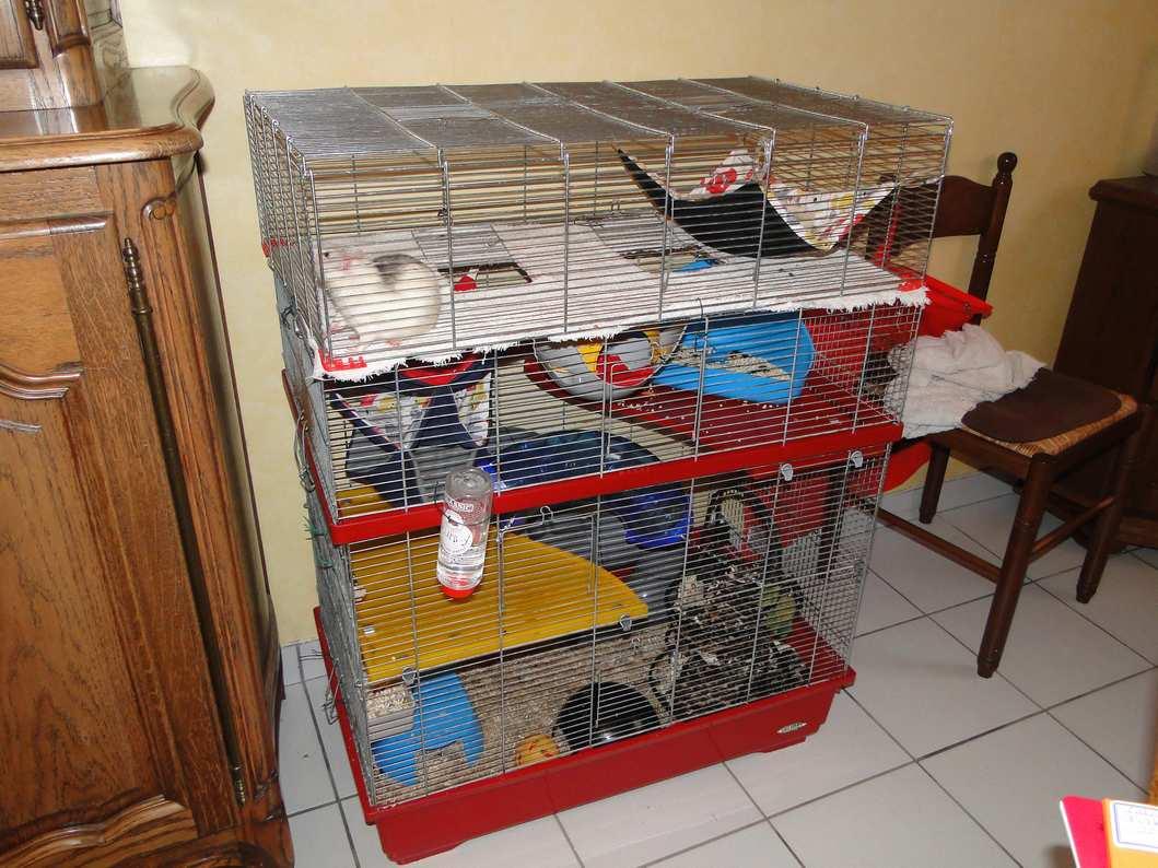 Agrandissement de ma cage Dsc04812