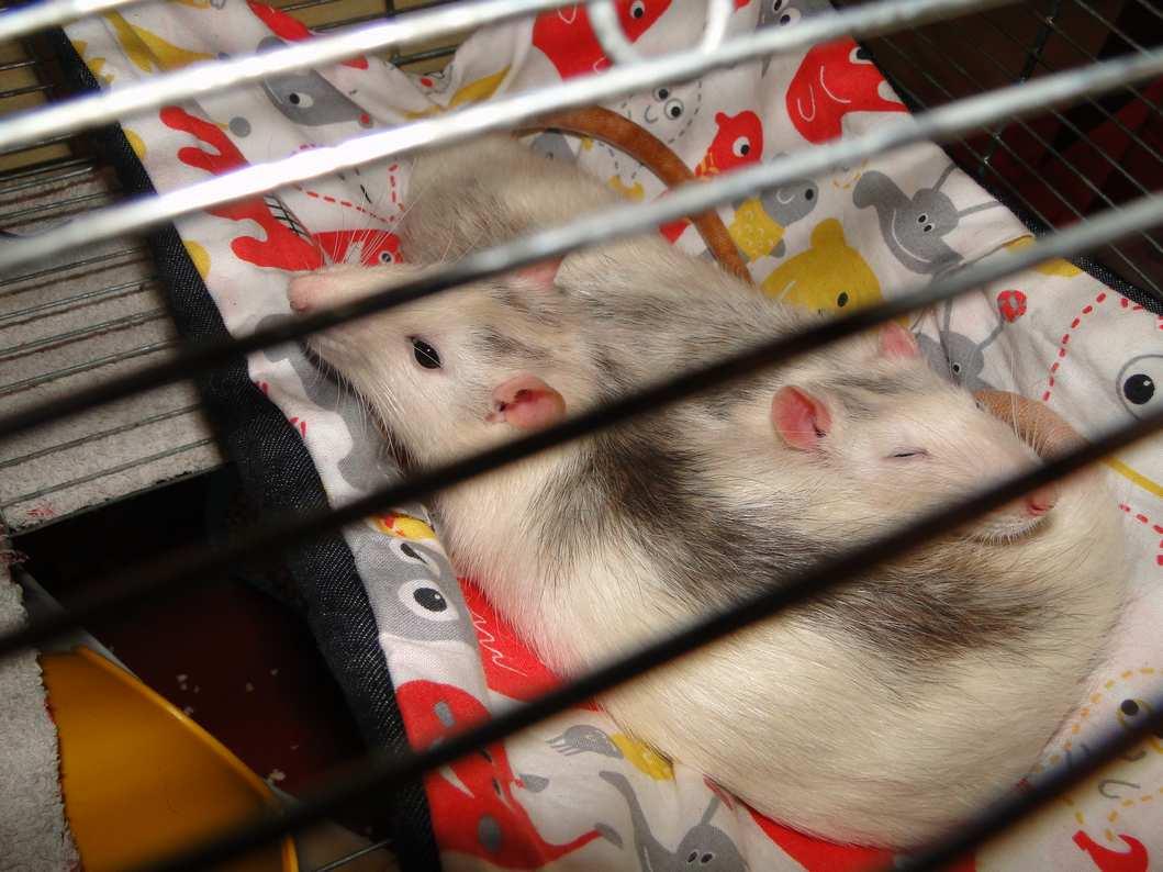Agrandissement de ma cage Dsc04813