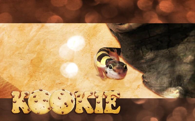 Conseils pour terrarium pour Gecko léopard  - Page 3 Kookie10