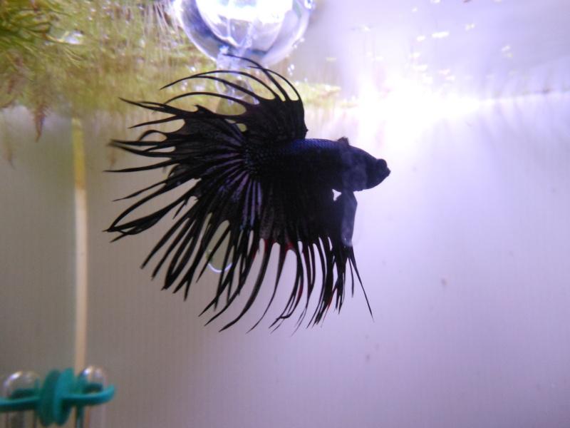 Problème algues dans aquarium compartimenté Dscn2011