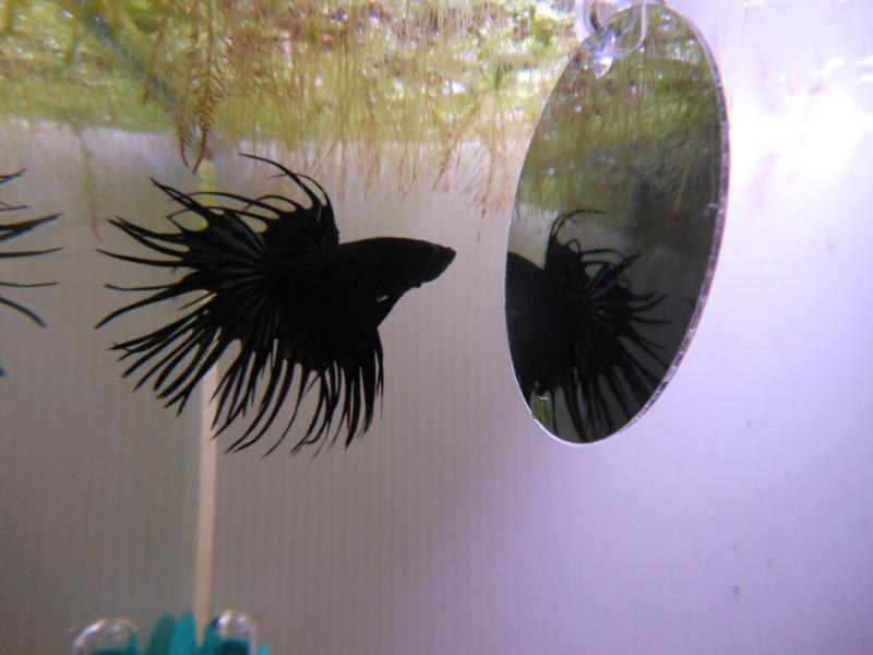 Problème algues dans aquarium compartimenté Dscn2012