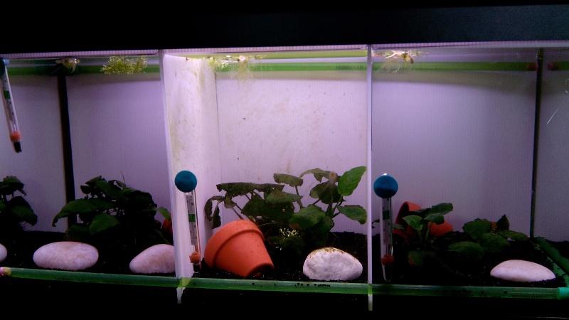 Problème algues dans aquarium compartimenté Img_2010