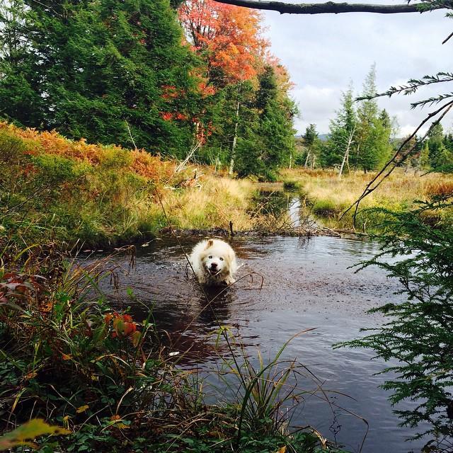 fall and backyard trails  10683910