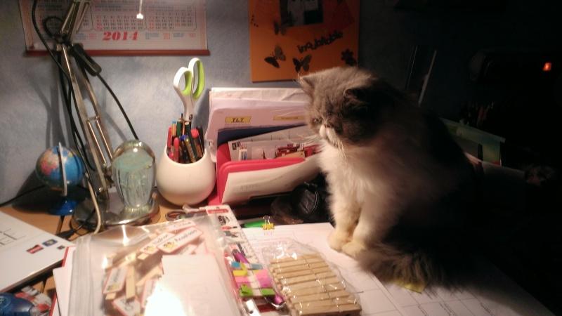 Juno né en septembre 2012 adopté par Gerbandier - Page 2 Wp_20120