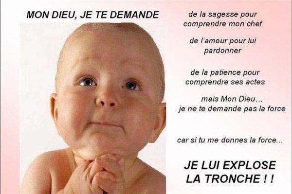 """Les """"Stupid Zèbres"""" c'est nous... - Page 18 31129510"""