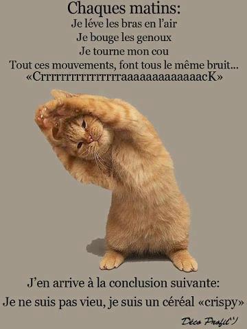 """Les """"Stupid Zèbres"""" c'est nous... - Page 18 31189810"""