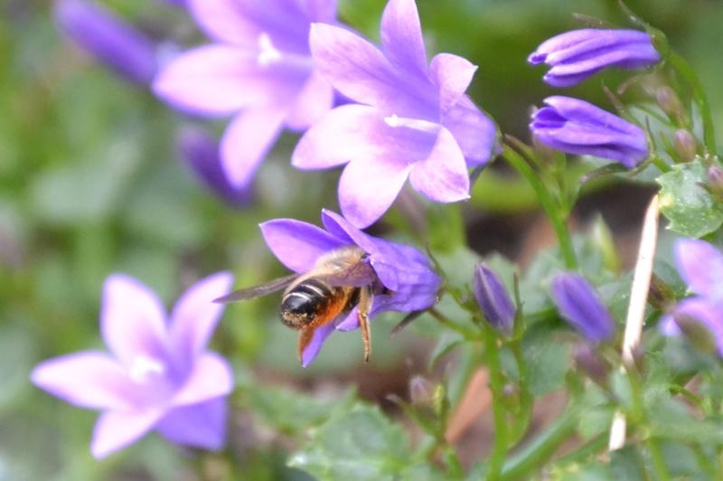 En un clic dans mon jardin ou en balade... Csc_0010