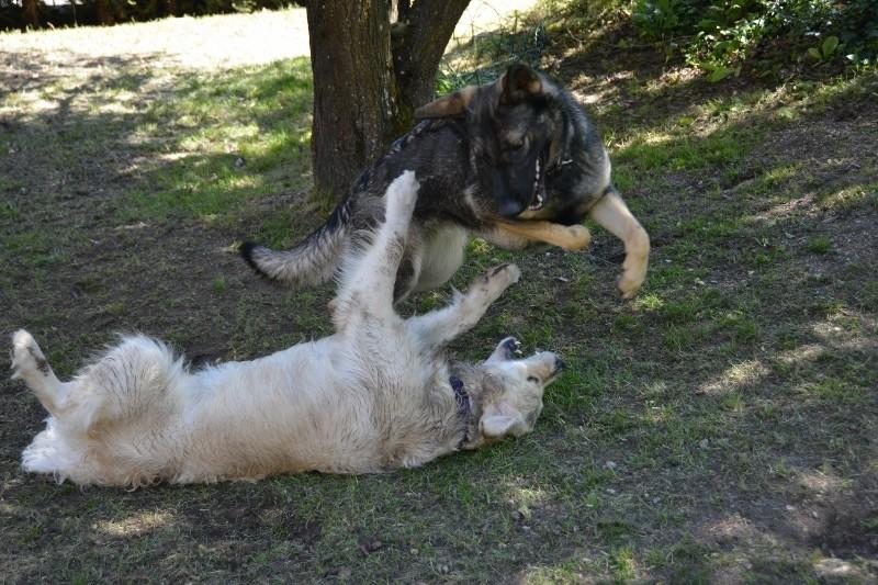 Vidéos attaques de chiens Remia_10