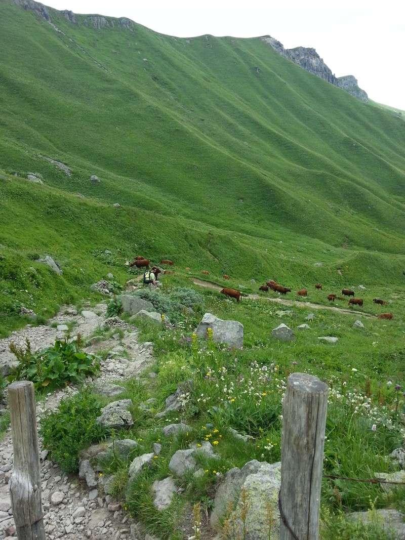 Auvergne - Le Mont-Dore - Domaine de la Grande Cascade 20140713