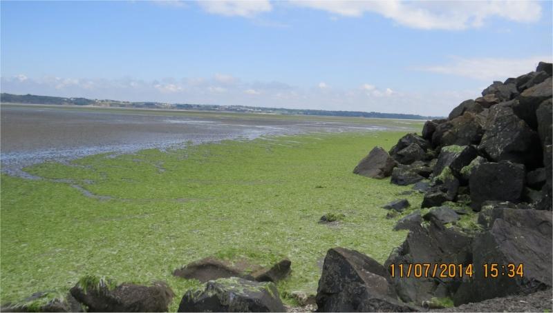 algues vertes à Cesson (Valais)  Cesson10