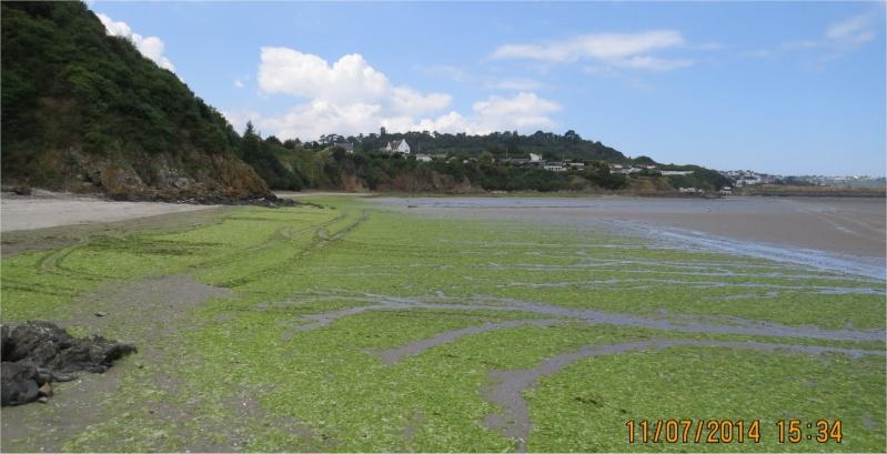 algues vertes à Cesson (Valais)  Cesson11