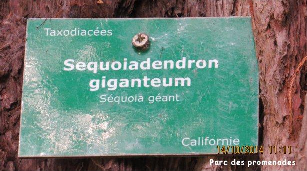 Sequoia au Parc des Promenades Parc_d21