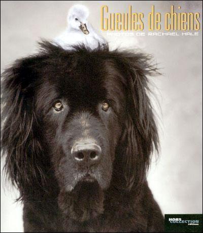 [Hale, Rachael] Gueules de chiens Gueule10