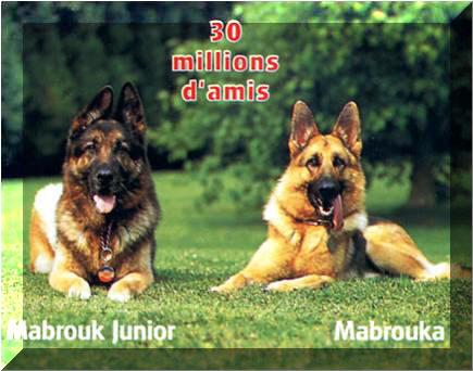 [Hutin, Jean-Pierre] Mabrouk, chien d'une vie Mabrou12