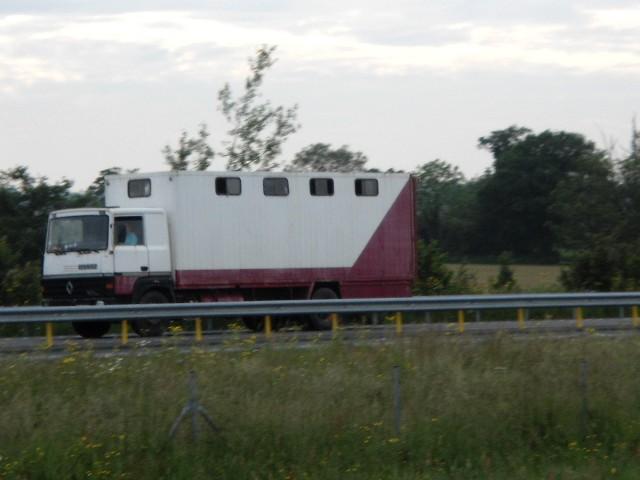 Transports de chevaux - Page 4 Dsc02668
