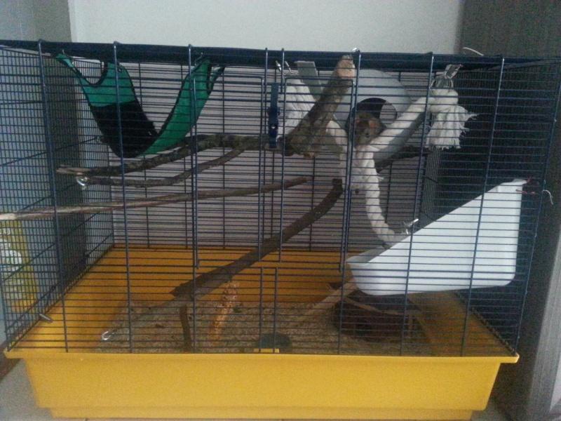 Accessoire maison pour cage 20140510