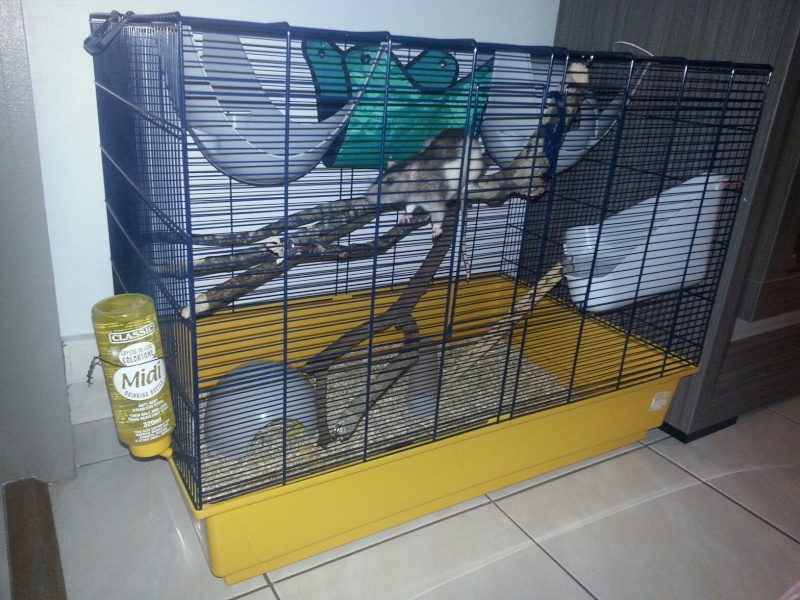 Cage pour deux ratous  20140712