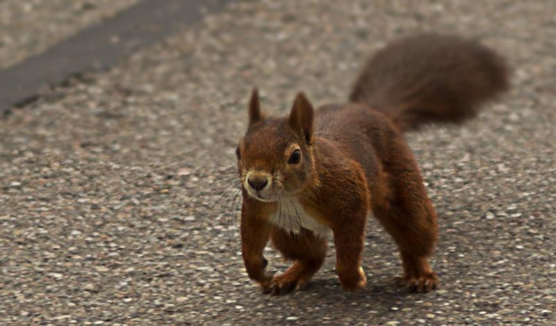 Petit écureuil... Eichi10
