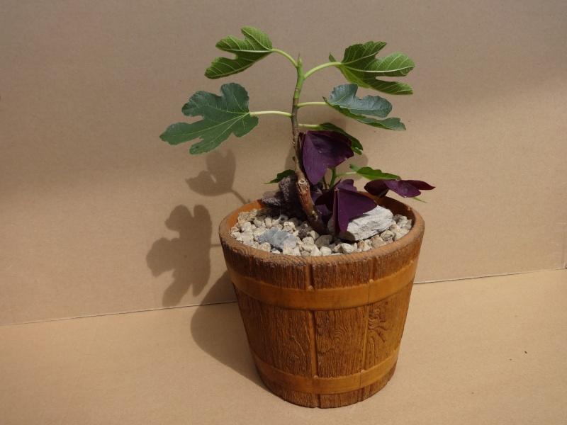 Kübelpflanzen - Seite 5 05011