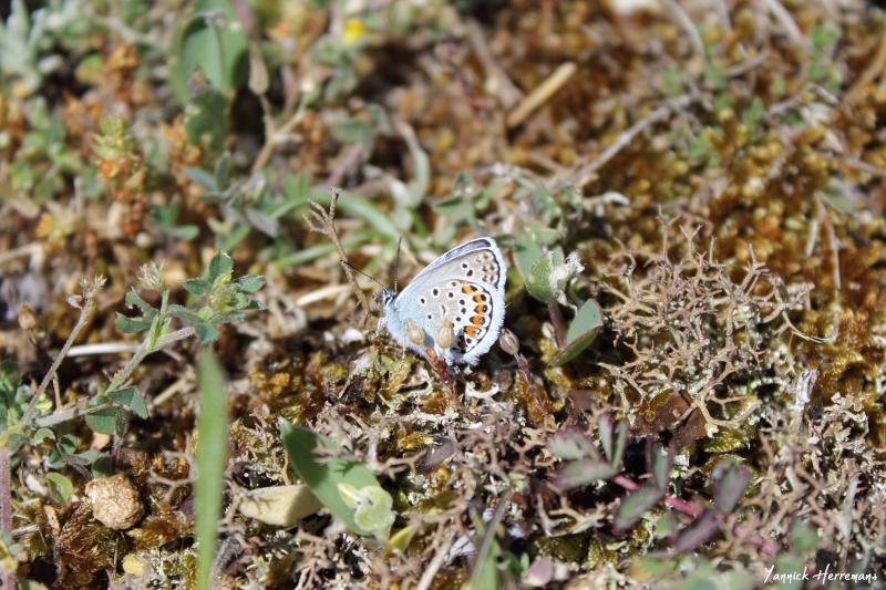 Journée de formation aux papillons à Plouhinec Img_7311