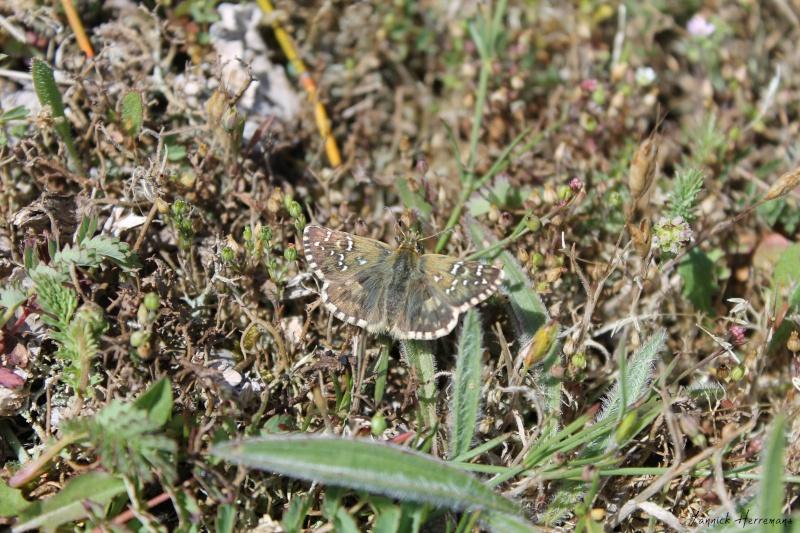 Journée de formation aux papillons à Plouhinec Img_7312
