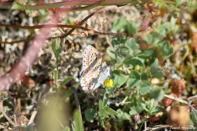 Journée de formation aux papillons à Plouhinec Img_7410