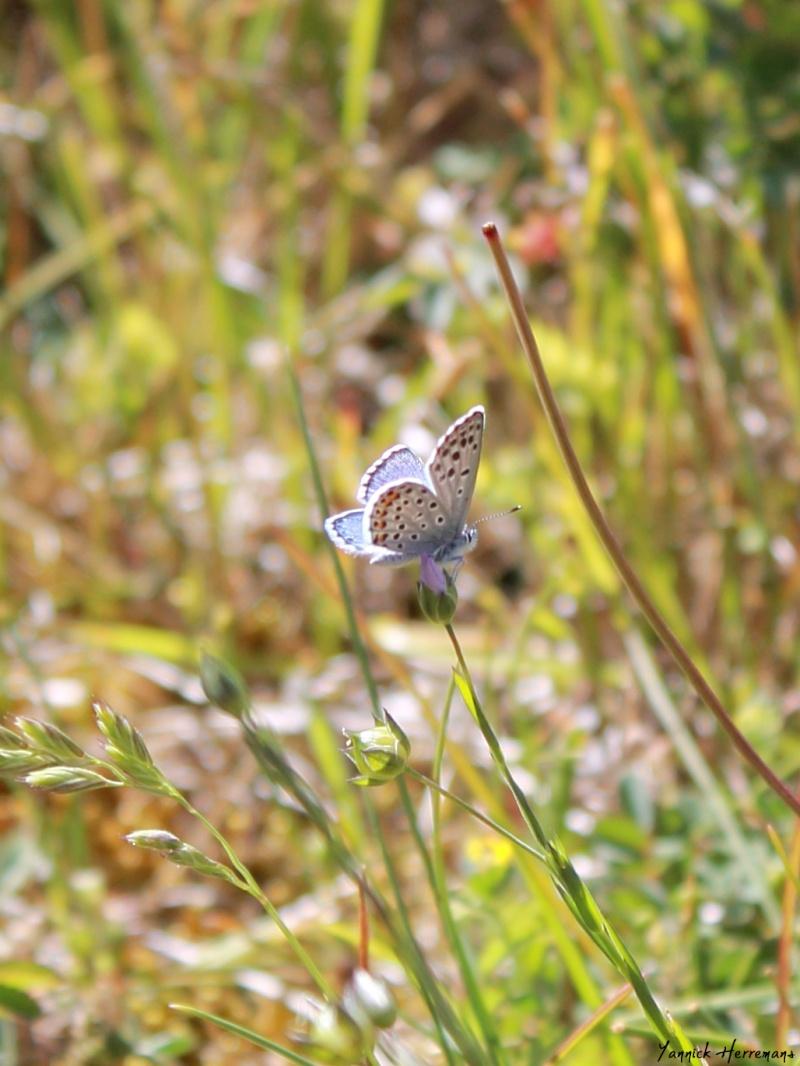 Journée de formation aux papillons à Plouhinec Img_7510