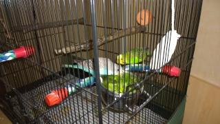 Yoshi, ma petite boule de plumes adorée! - Page 4 Wp_20125