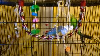 Yoshi, ma petite boule de plumes adorée! - Page 4 Wp_20126