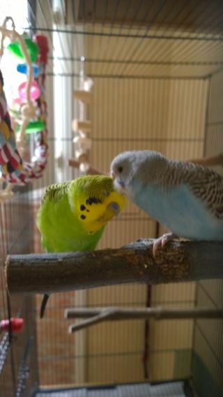 Yoshi, ma petite boule de plumes adorée! - Page 4 Wp_20128