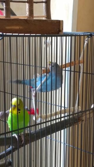 Yoshi, ma petite boule de plumes adorée! - Page 4 Wp_20129