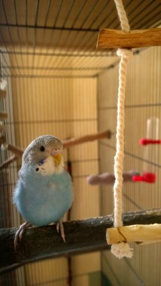 Yoshi, ma petite boule de plumes adorée! - Page 4 Wp_20131