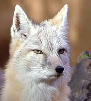 I tape their eyes shut so they stay in the dark forever. Like me. Renard11