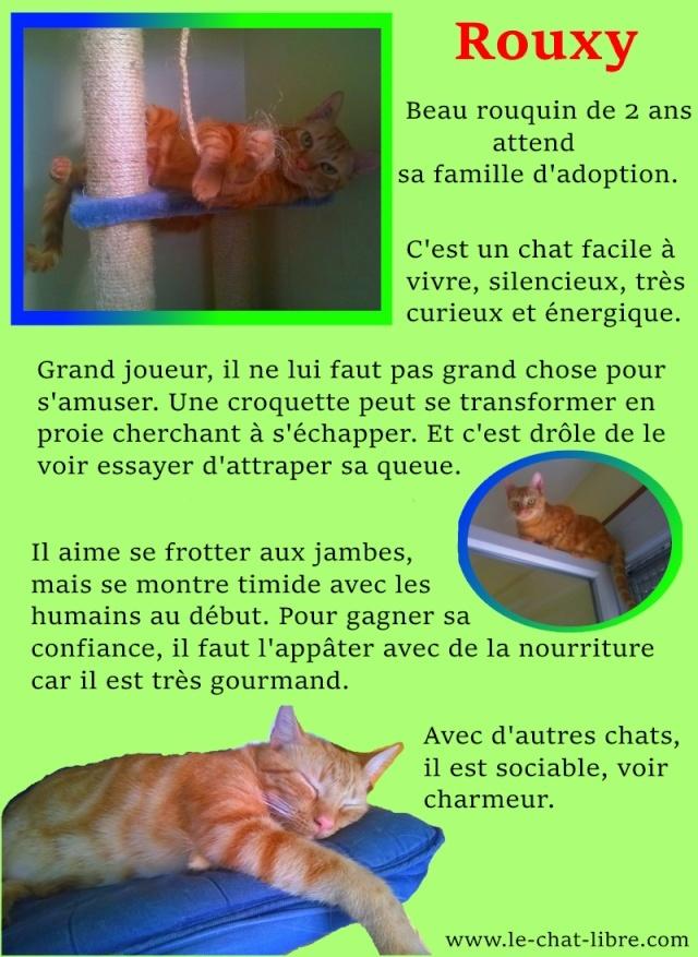 Des nouvelles de Rouxy - Page 2 Rouxy10