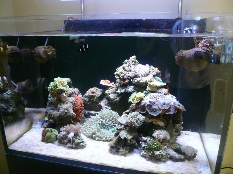 mon aquarium P1050610