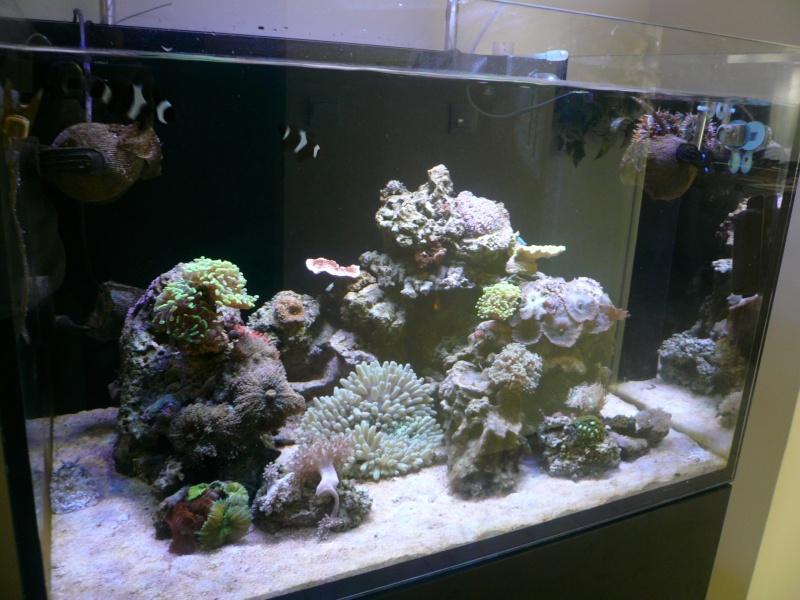 mon aquarium P1050612