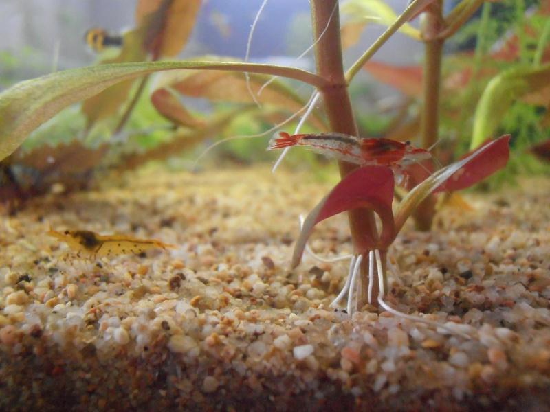 Photos aquario' P9170010