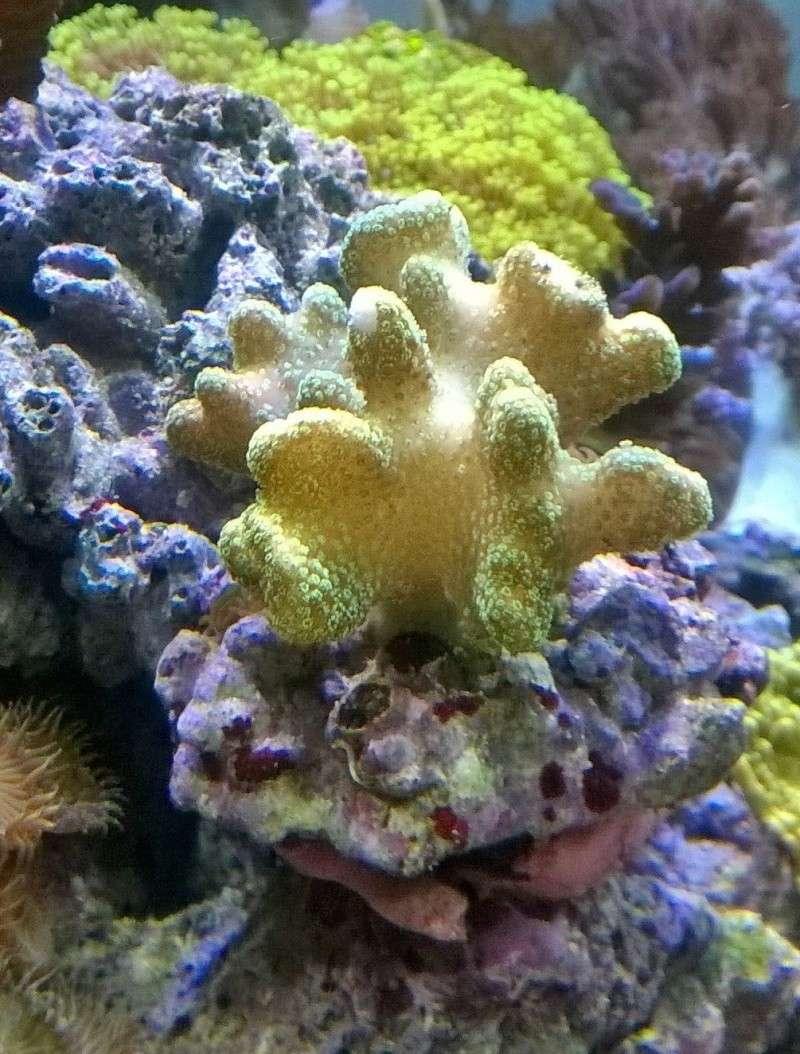 Probleme poisson lime avec ce corail? Wp_20114