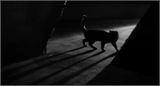 The Black Cat (1934) [Horror | Crime] 411