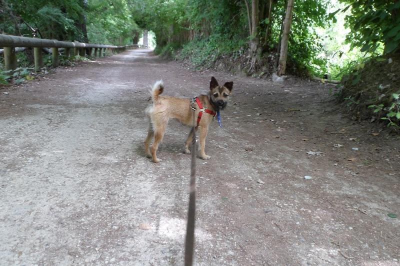 Lana, croisée border terrier, très attachante !10 mois, adoptée en mai 2014, Sam_2611