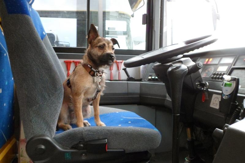 Lana, croisée border terrier, très attachante !10 mois, adoptée en mai 2014, Sam_2813