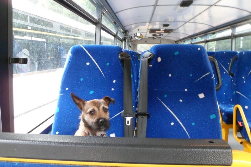 Lana, croisée border terrier, très attachante !10 mois, adoptée en mai 2014, Sam_2818