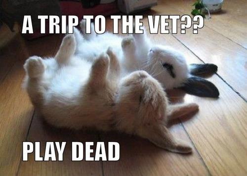 Životinjski meme album Funny_10