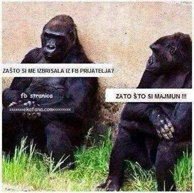 Životinjski meme album Majmun10