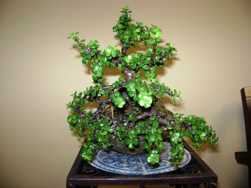 Need some help - first Bonsai - Jade tree green leaves falling off 00710