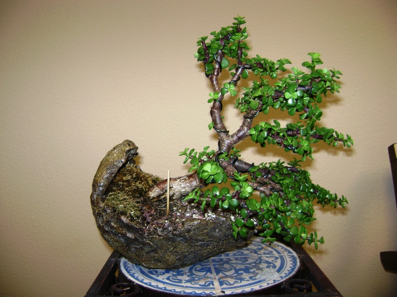 Need some help - first Bonsai - Jade tree green leaves falling off 00810