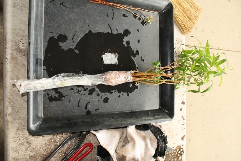"corkscrew willows and cactus ""bone"" Img_2112"