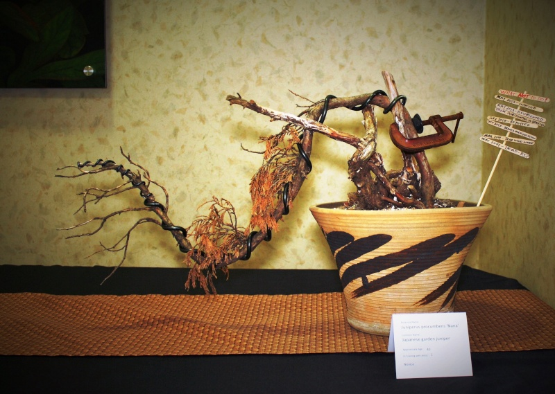 Milwaukee Bonsai Society 44th Annual Exhibit Mbs_2019